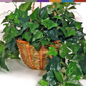 air purifying plants safe for pets