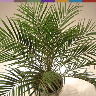 best houseplants for air purification
