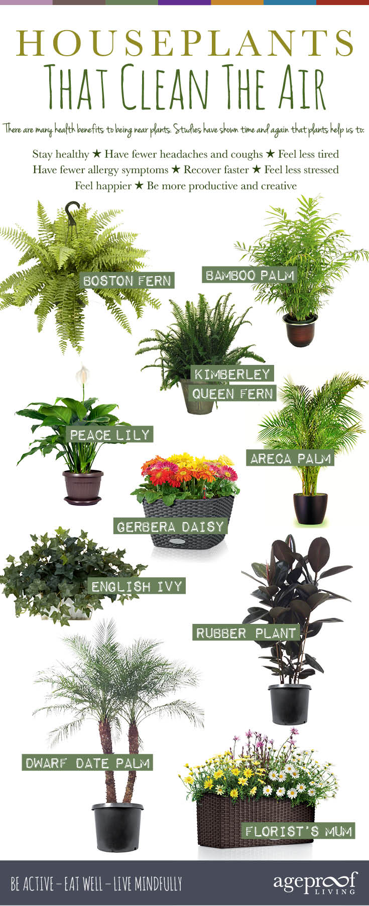 Houseplants That Clean The Air Infographic