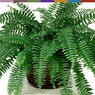 plants that clean the air of mold